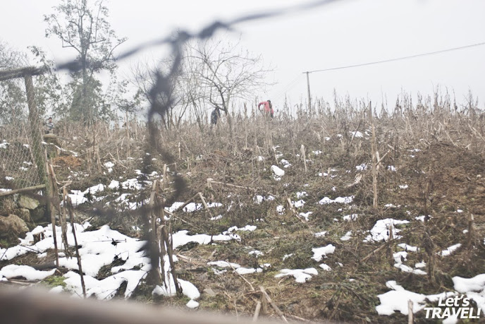 thiệt hại của tuyết ở sâu chua, lào cai