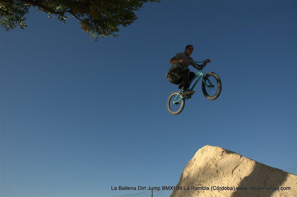 Ballena Dirt Jump BMX 2009 - BMX_09_0107.jpg