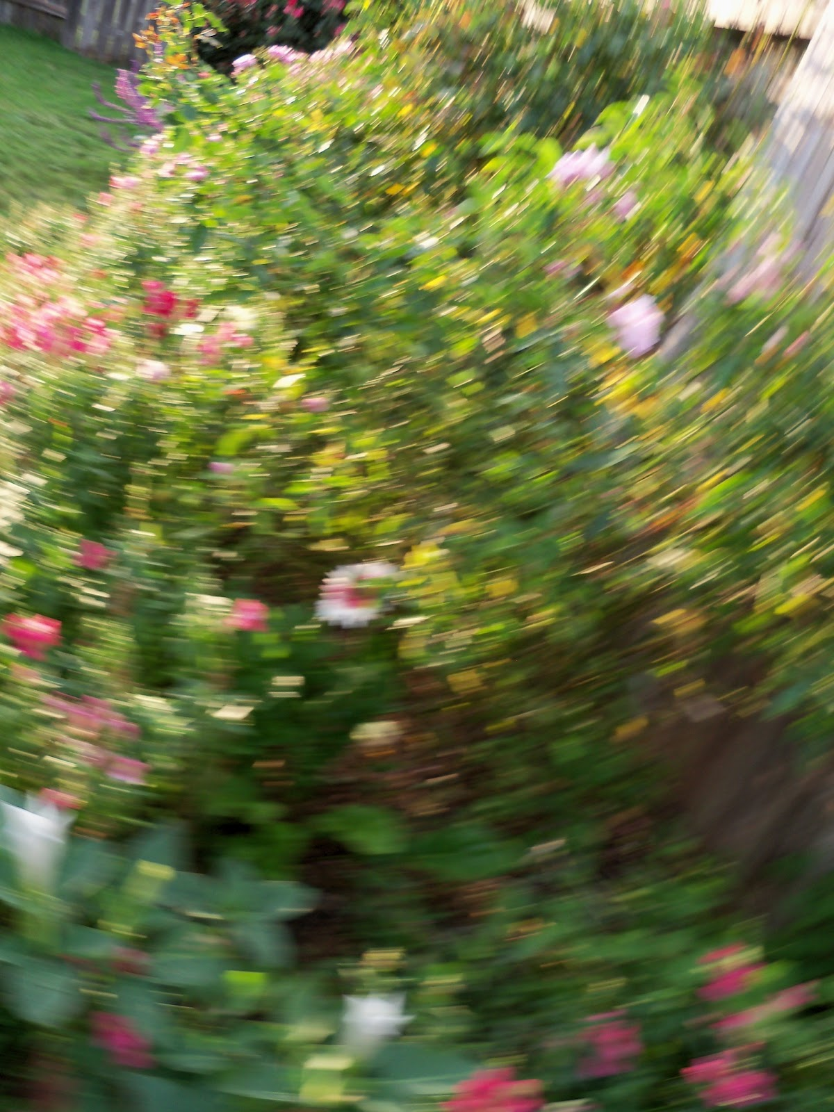 Gardening 2012 - 115_1773.JPG