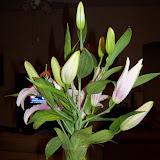 Bouquets - 101_0099.JPG