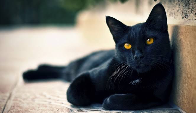 Menguak Tabir Binatang Aneh Sering Masuk Rumah