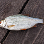 20160709_Fishing_Gorodyshche_011.jpg
