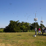 Purple Martin Banding Hammonasset Park July 2012 - BC3G6004.jpg