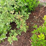 Gardening 2010 - 101_1142.JPG
