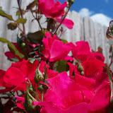 Gardening 2013 - 115_5716.JPG