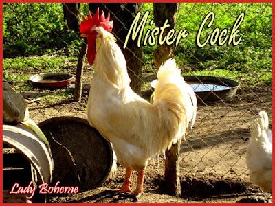 hiperica di lady boheme blog di cucina, ricette facili e veloci. Ricetta torta di mele con pinoli e la fabbrica delle uova