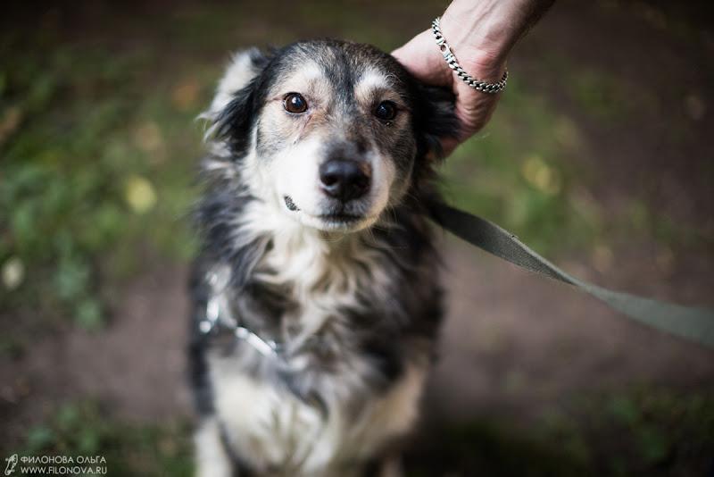 Нужна помощь - ищется дом для пса 7 лет! 14-07-09-filonovawed-20-09-27-68