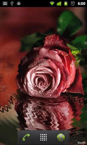 Water Ripple Pink Rose LWP