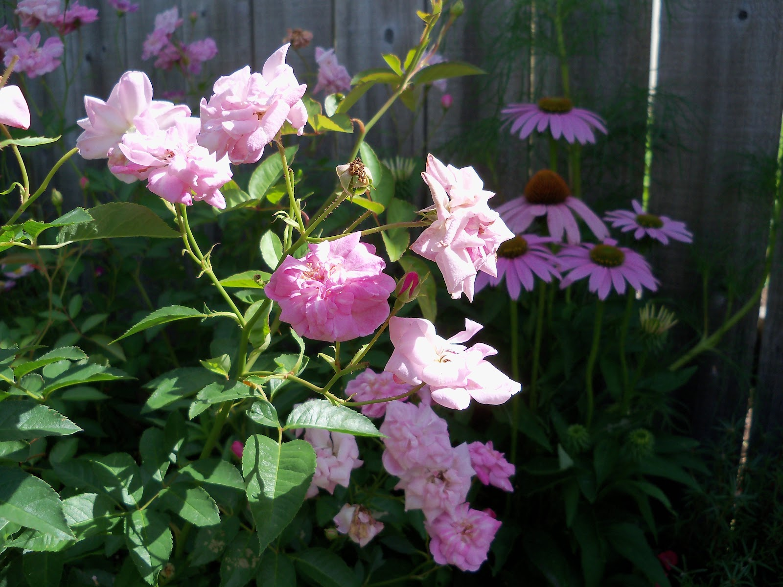 Gardening 2010, Part Three - 101_3679.JPG