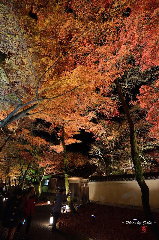 京都寶嚴院夜楓