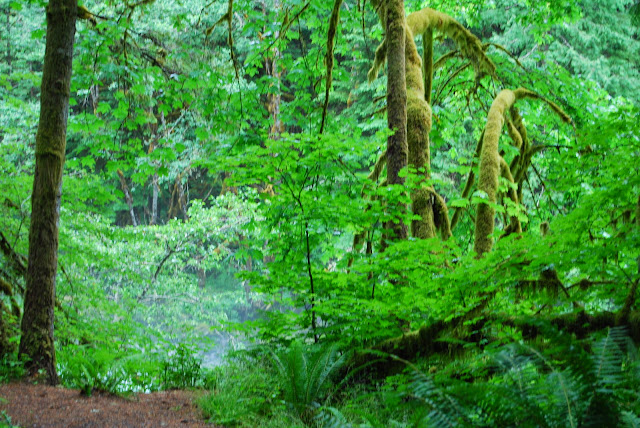 Green fills the forest on Horseshoe Bend Trail / Credit: Bellingham Whatcom County Tourism
