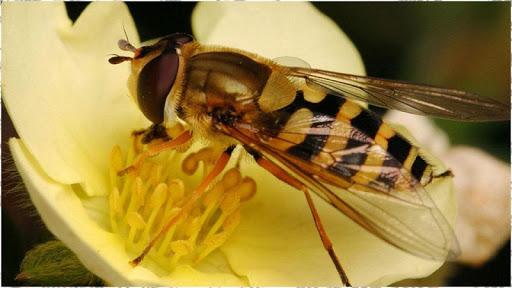 昆虫の背景
