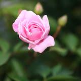 Gardening 2012 - IMG_2737.JPG