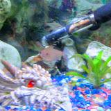 Fish - IMG_0074-EFFECTS.jpg
