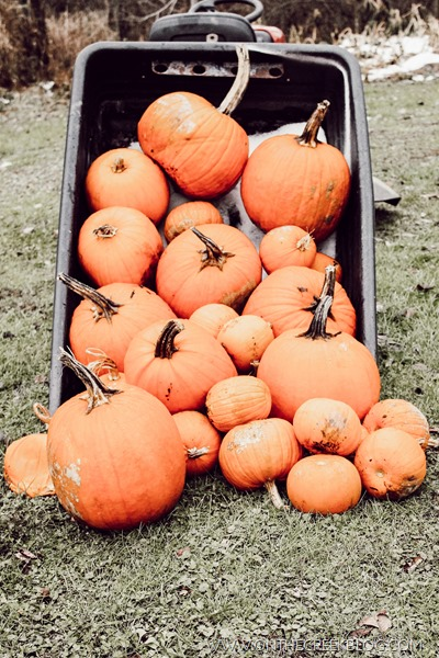 Pumpkins in a lawn cart