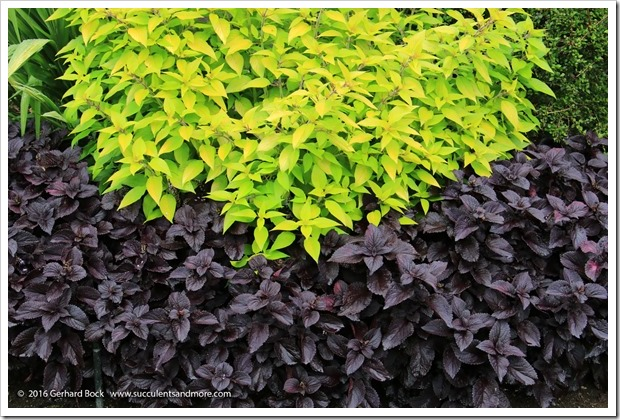 160906_Butchart_Gardens_0015