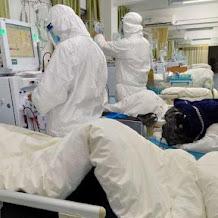 Ular atau Kelelawar Penyebar Virus Corona di China