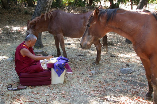 Lama Zopa Rinpoche blessing horses at Land of Calm Abiding, California, USA.