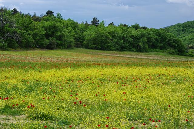 Entre Viens et Simiane-la-Rotonde (Vaucluse), 11 mai 2014. Photo : J.-M. Gayman