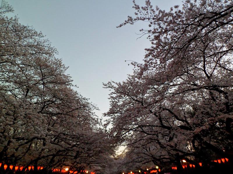 2014 Japan - Dag 1 - tom-SAM_0377-0006.JPG