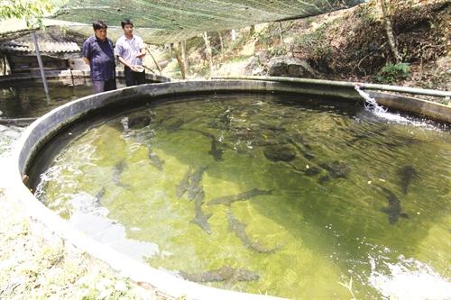 Kỹ thuật, kinh nghiệm nuôi cá tầm - 570615aa8e983
