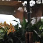 Dentro del Orquideorama