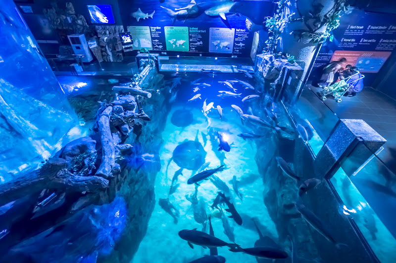 quaria KLCC Sharks1