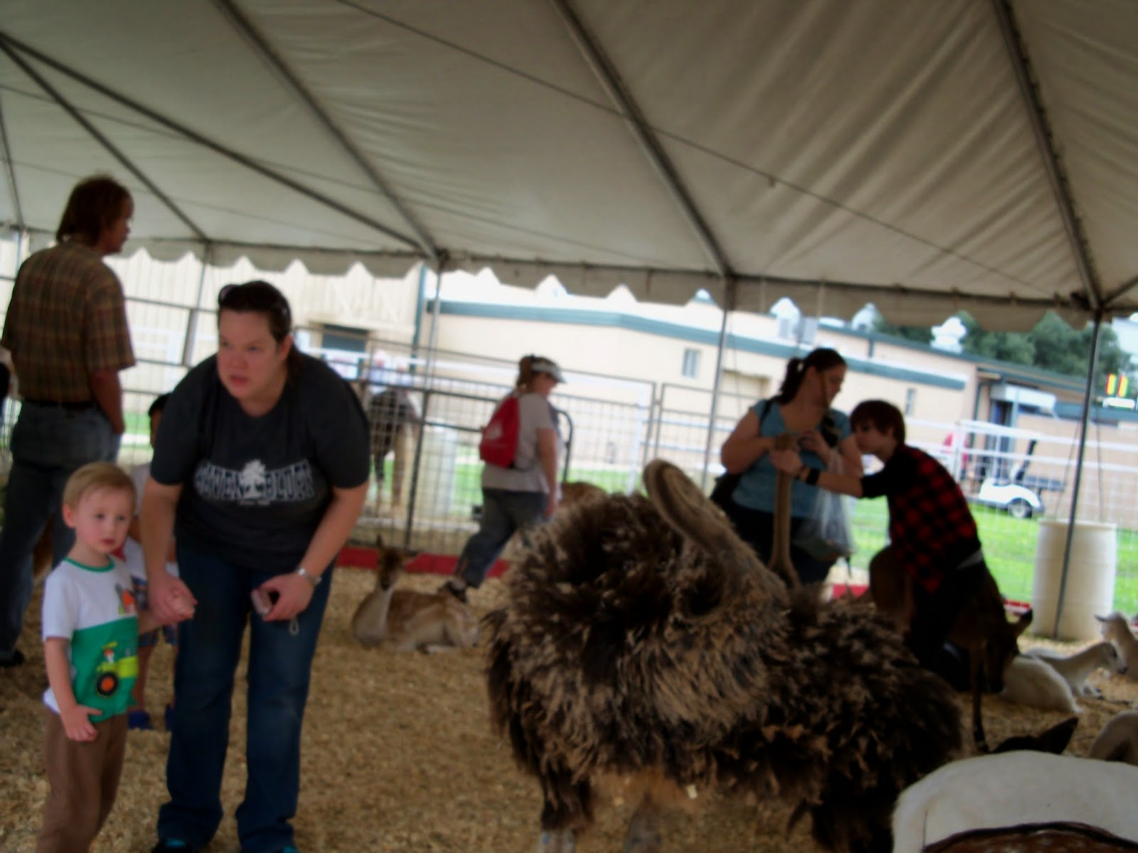 Fort Bend County Fair 2014 - 116_4313.JPG