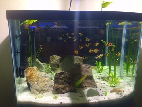 buy-a-fish-tank