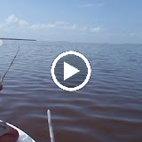 Tarpon in Garfeild.avi
