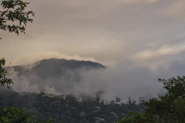 Los Cedros, 1400 m, Montagnes de Toisan, Cordillère de La Plata (Imbabura, Équateur), 20 novembre 2013. Photo : J.-M. Gayman