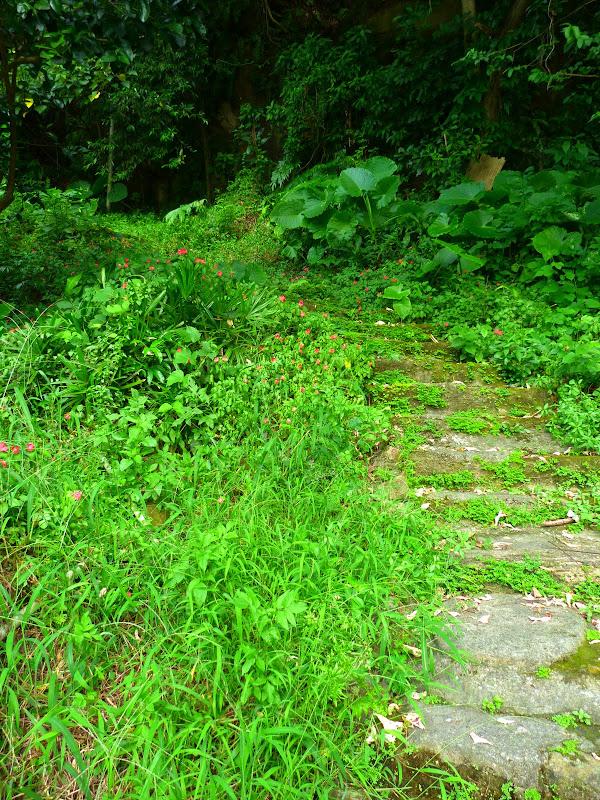 Taipei. Si Shou shan, en plein coeur de Taipei. Accès par un chemin bien plus sauvage. - P1240817.JPG