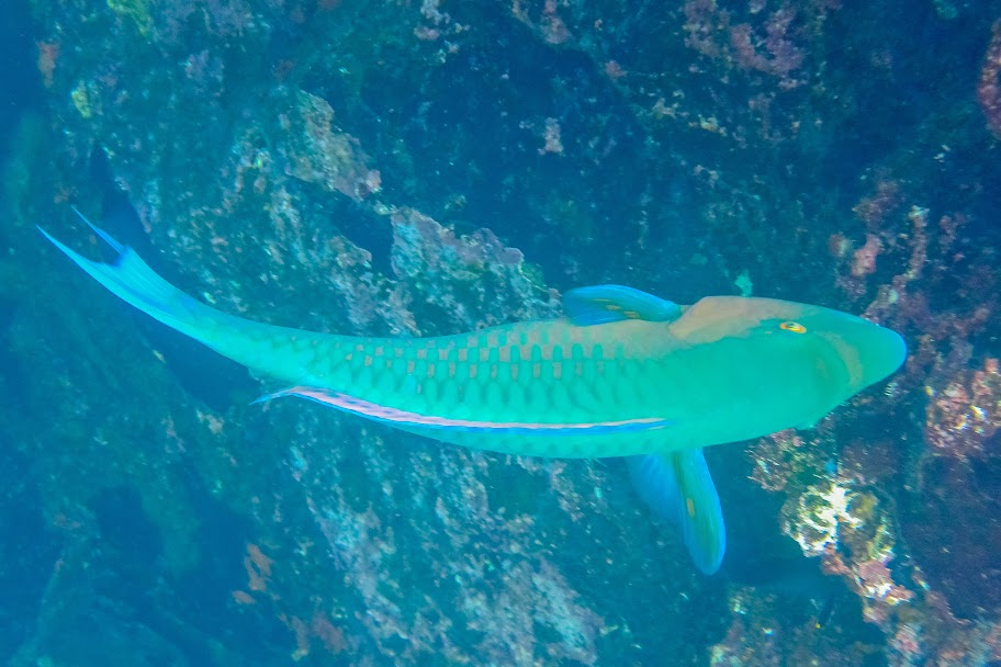 galapagos - Galapagos_FB_2-41.jpg