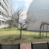 2014 Japan - Dag 4 - max-IMG_1510-0010.JPG