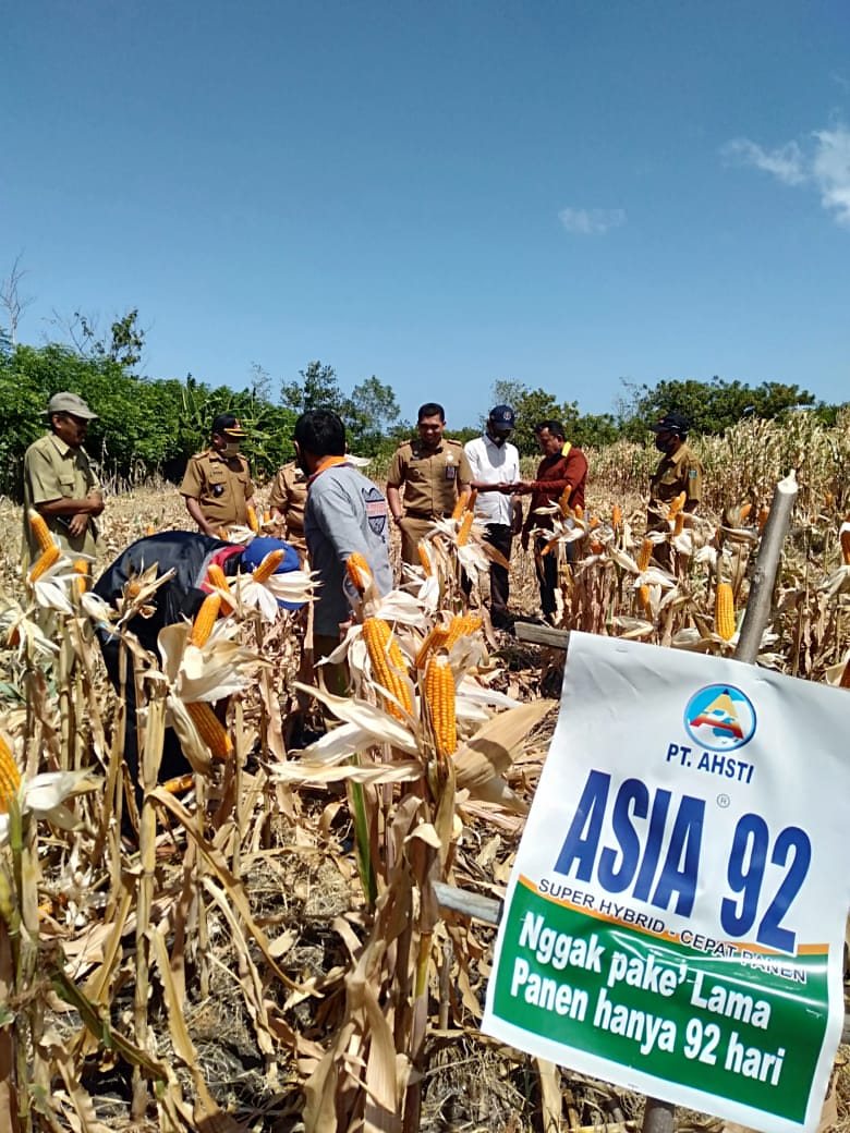 Penyuluh dan Petani di Takalar Genjot Produksi Jagung, Kadis Pertanian Apresiasi Capaian Hasil