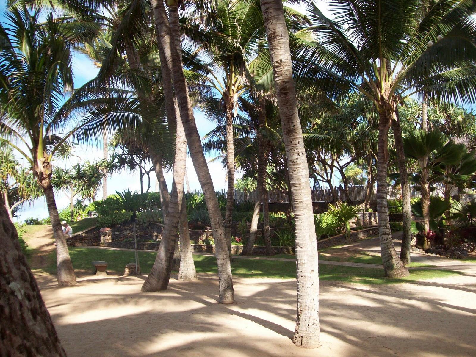Hawaii Day 8 - 114_2216.JPG