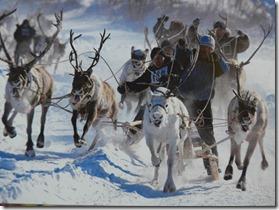 musee d'histoire L'utilisation sportive des rennes