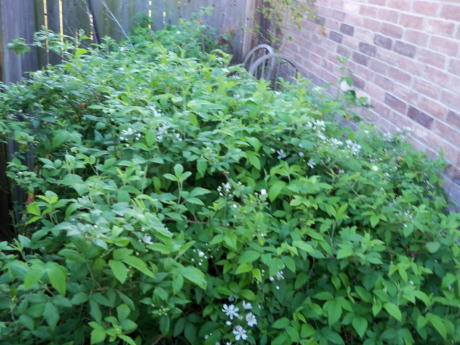 Gardening 2013 - 115_5478.JPG