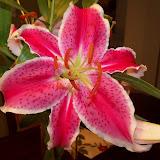 Bouquets - 101_0124.JPG
