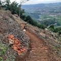 Puluhan Pohon Ditebang Pemilik Villa, Warga Desa Cibodas Khawatir Terjadi Longsor
