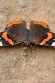 mariposas y otros 016.JPG