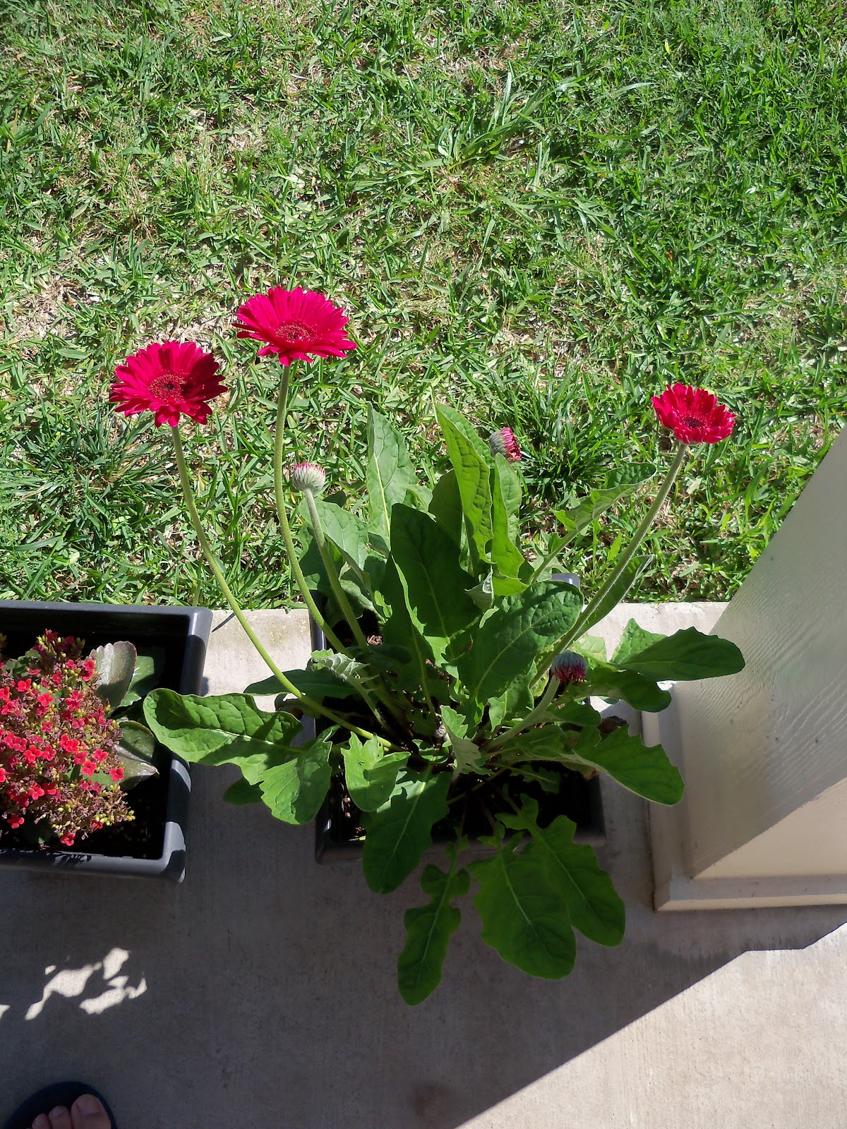 Gardening 2010 - 101_1330.JPG