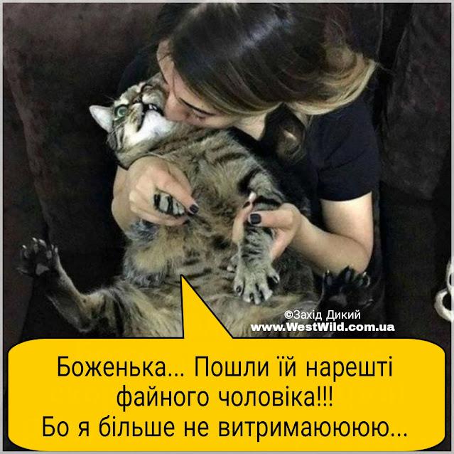 коти приколи