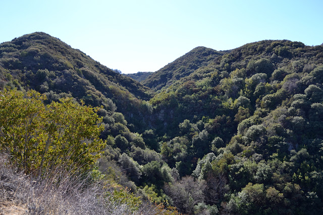 looking up the canyon above Forbush Flat