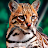 Megha Shakya avatar image