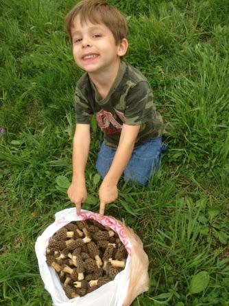 Herman Brothers Blog Morel Mushroom Motherload