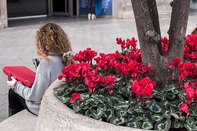 El poder del rojo, foto de Carlos Larios