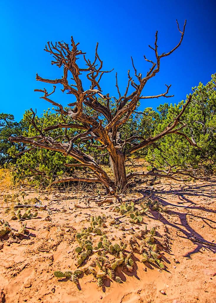 """Canyonlands Oldtimer"" by Rich Sherman --3d Place Print"