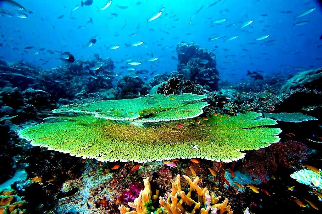 Chicken reef112014Raja Ampat
