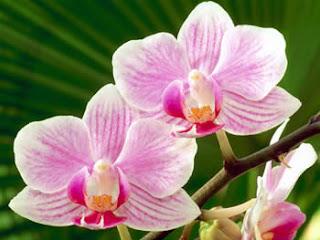 Fiori Piante e Giardini del Mondo: ORCHIDEE: SIMBOLO DI ...